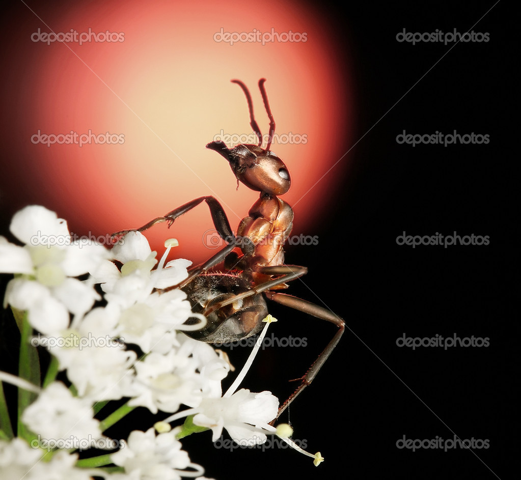Ant with bouquet of flowers