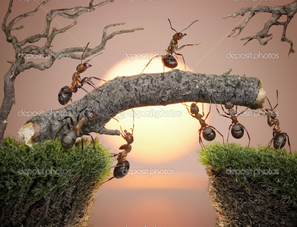 ant teamwork picture - HD 3000×2293