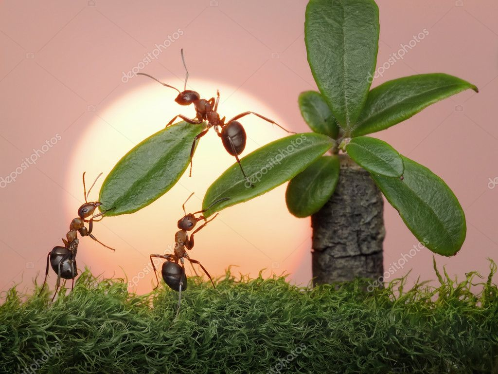 Team of ants work with leaves of palm