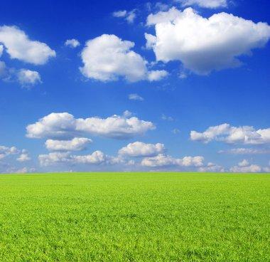 """Картина, постер, плакат, фотообои """"зеленое поле картины"""", артикул 4792656"""