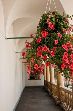 Flowers in gallery