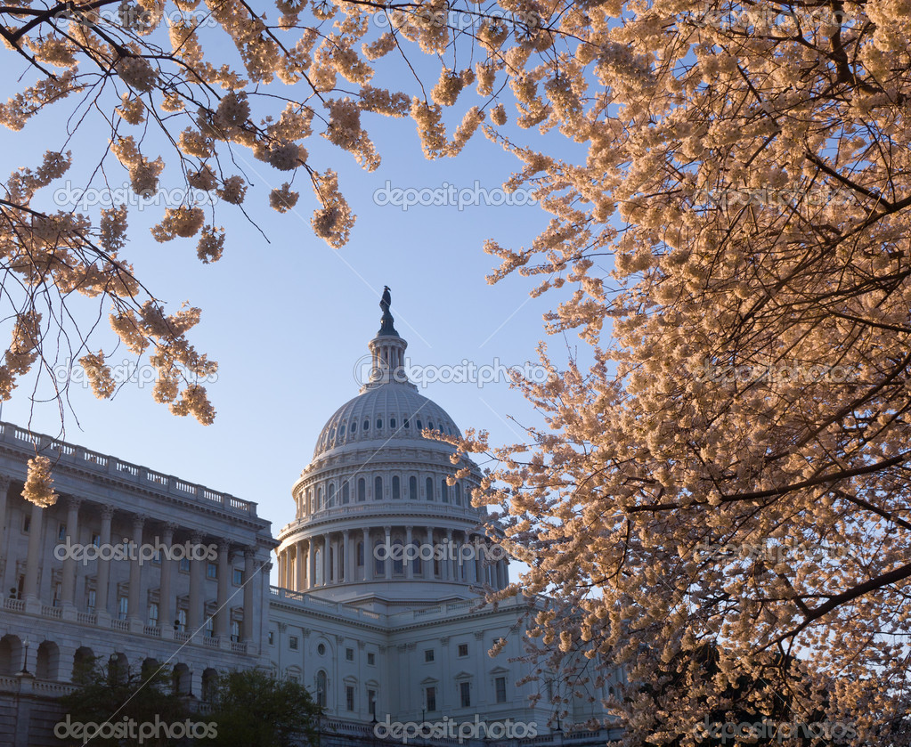 Sunrise at Capitol with cherry blossoms framing the dome