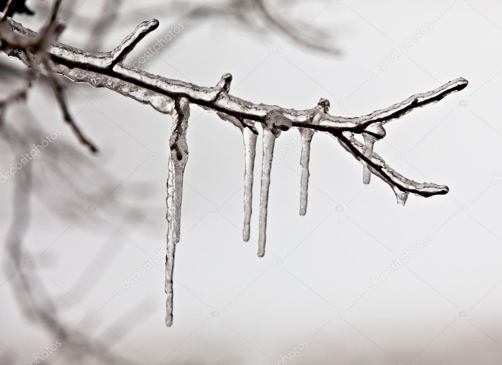 Ice and snow on a branch