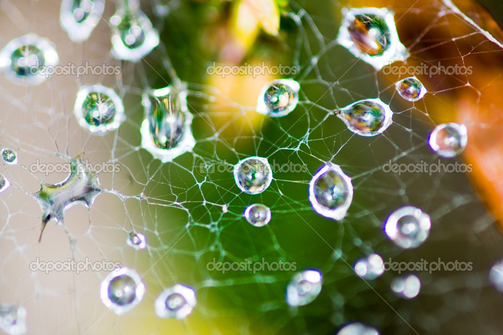 Morning dew on spider web