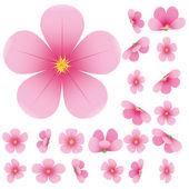 Sakura virágokat