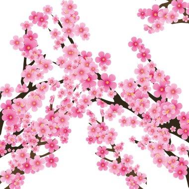 Sakura tree 2