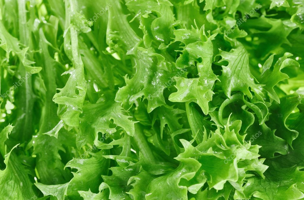 Fresh green lettuce leafs, food background