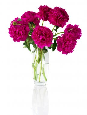 Bouquet of peonies in vase