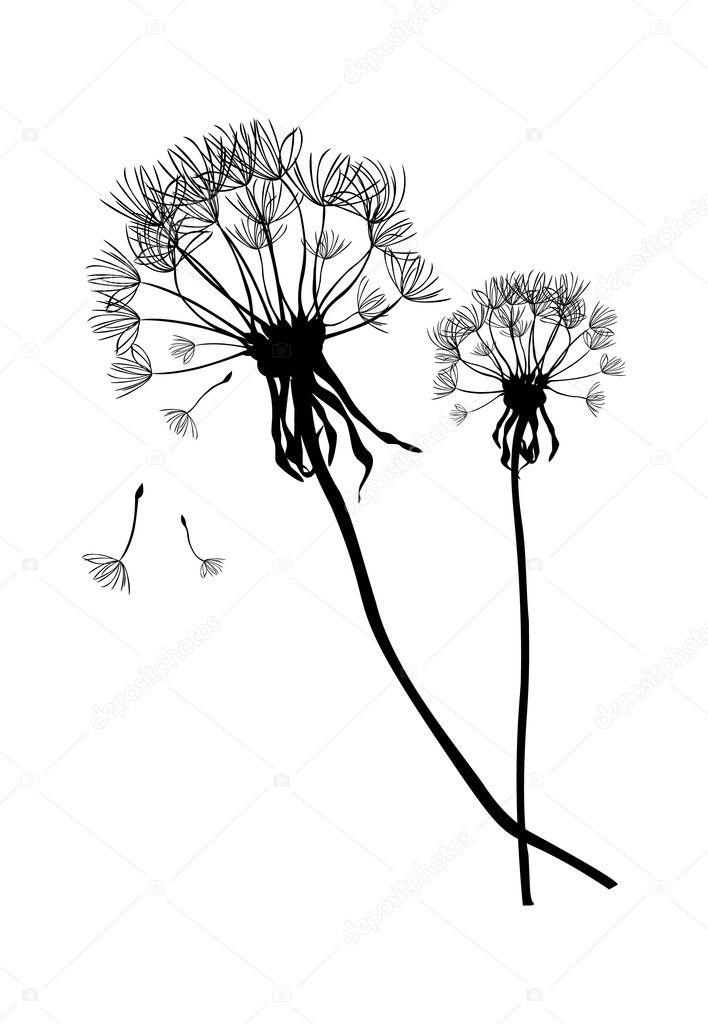 Two black vector dandelions,illustration