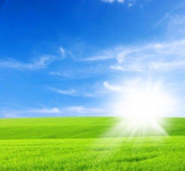 Green field,blue sky and sun stock vector