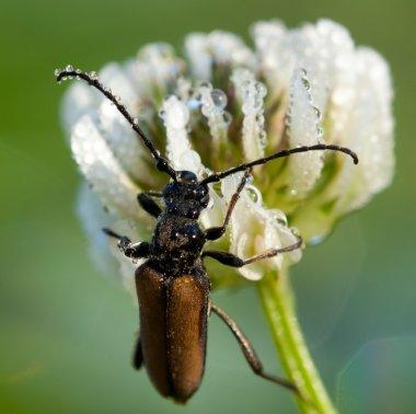 Wet bug