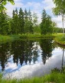 Fényképek Forest lake