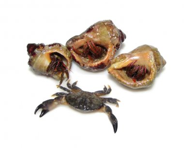 Snail, crab, hermit crab on the white background