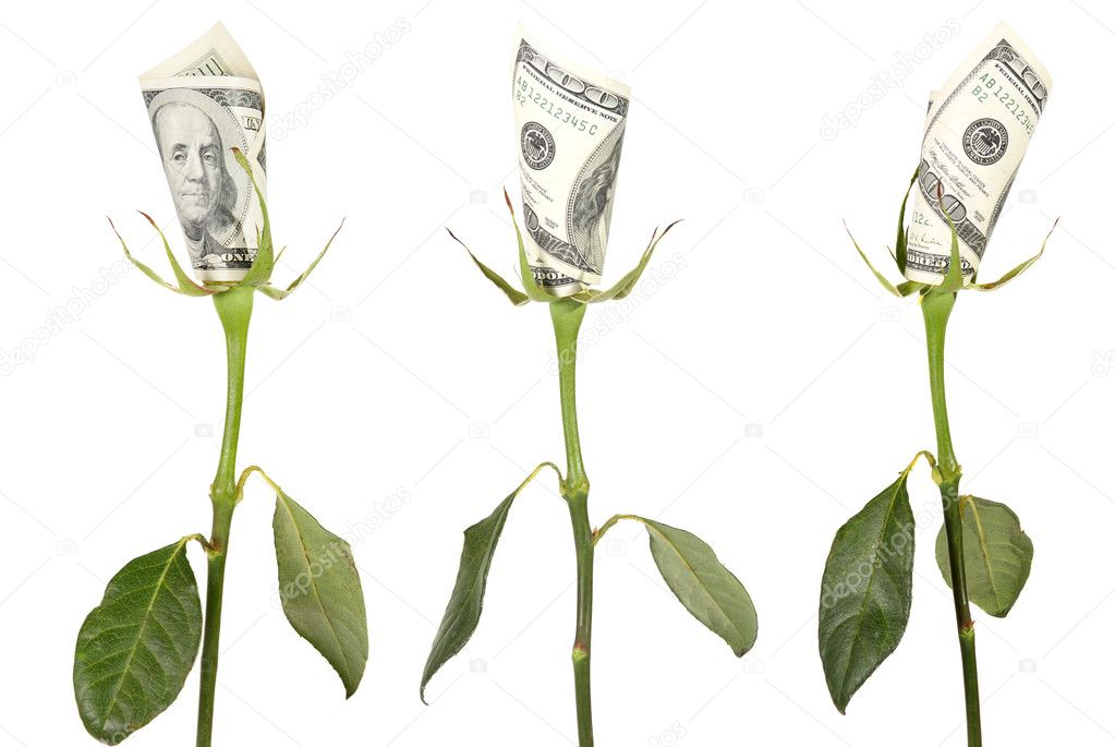 Flower of the American dollar