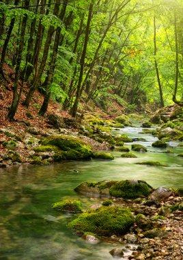 "Картина, постер, плакат, фотообои ""река глубоко в горном лесу визитки"", артикул 5019797"