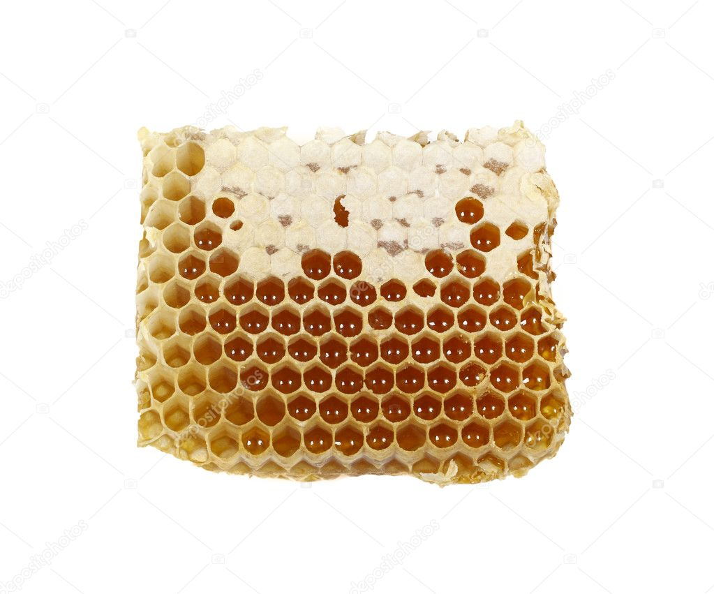 A piece of honeycomb with honey
