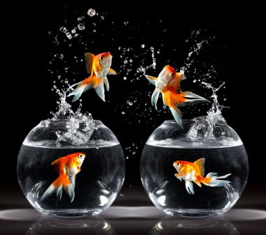 Goldfishs jumps