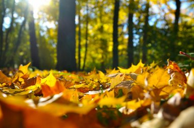 Macro photo of a fallen leaves in autumn forest