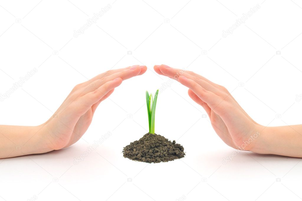 Hands sheltering a young plant
