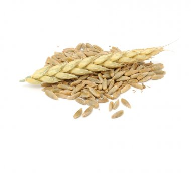 Rye Grains with Ear