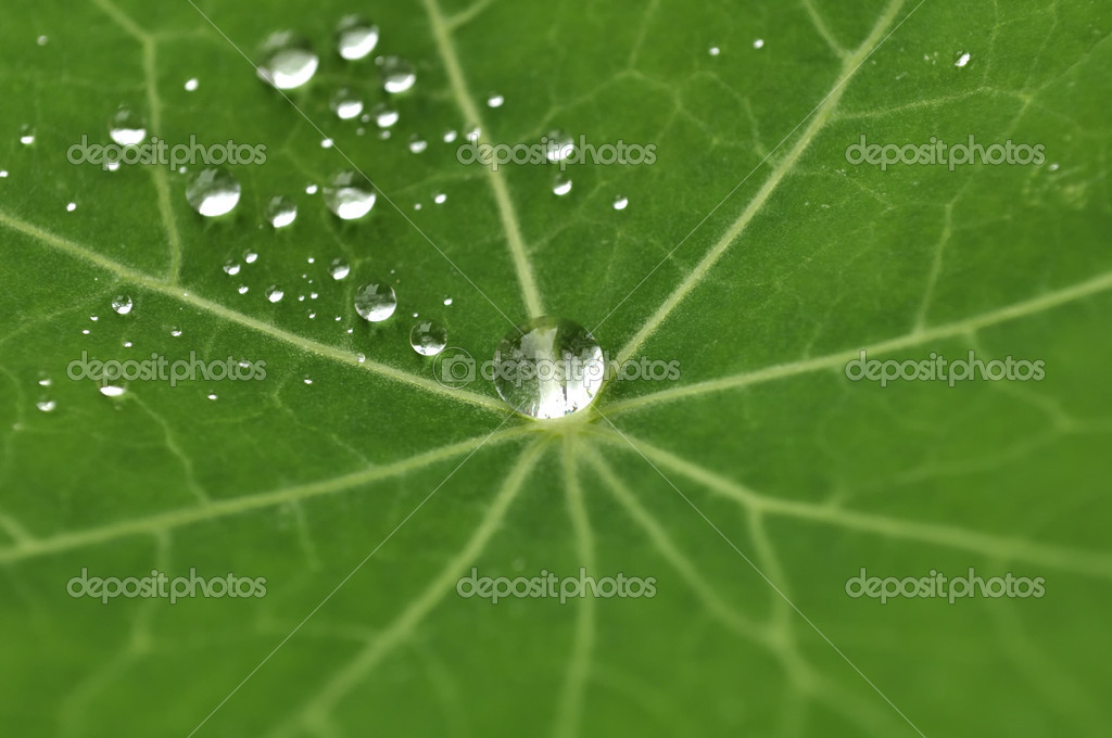 Green Leaf with Dew Drops