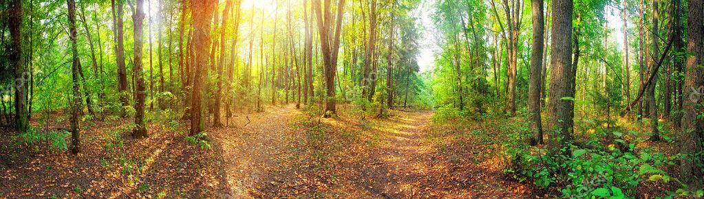 Фотообои Лес Панорама