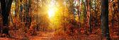 podzimní Les panorama