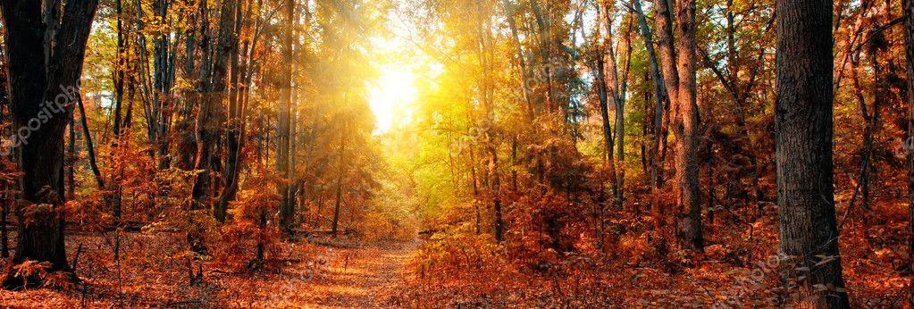 Фотообои Осенний Лес Панорама