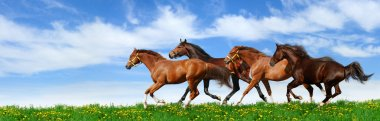 Herd gallops in green field stock vector