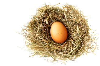 Nest with egg