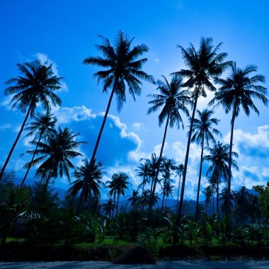 Palm silhouettes on blue sky