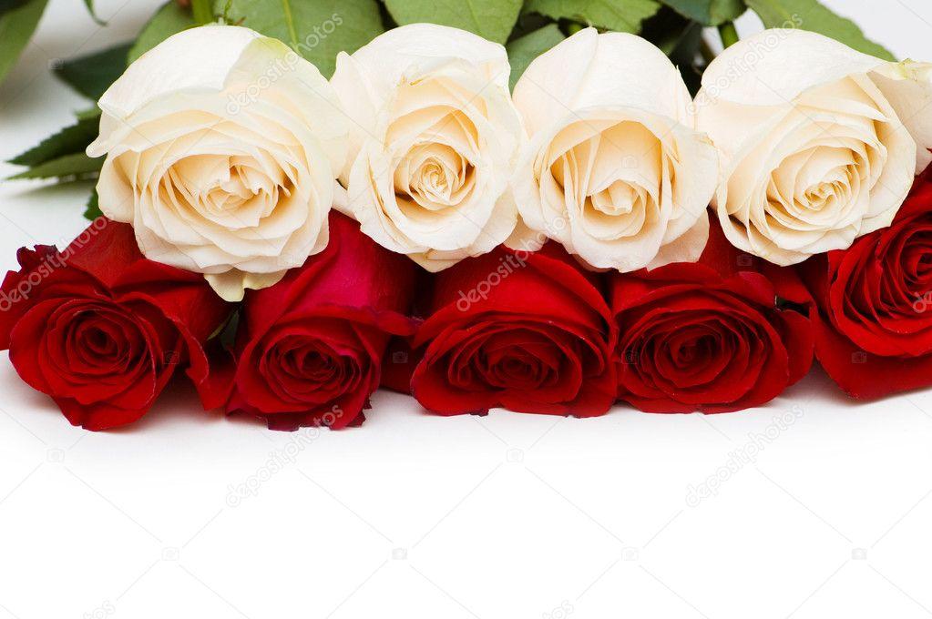 Картинки красивые цветы на белом фоне 36 фото
