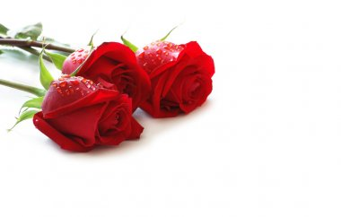 Three red roses with water drops isolated on white