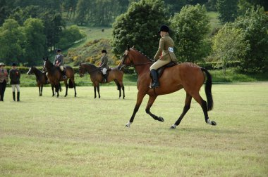 Horses at dressage tests in the park