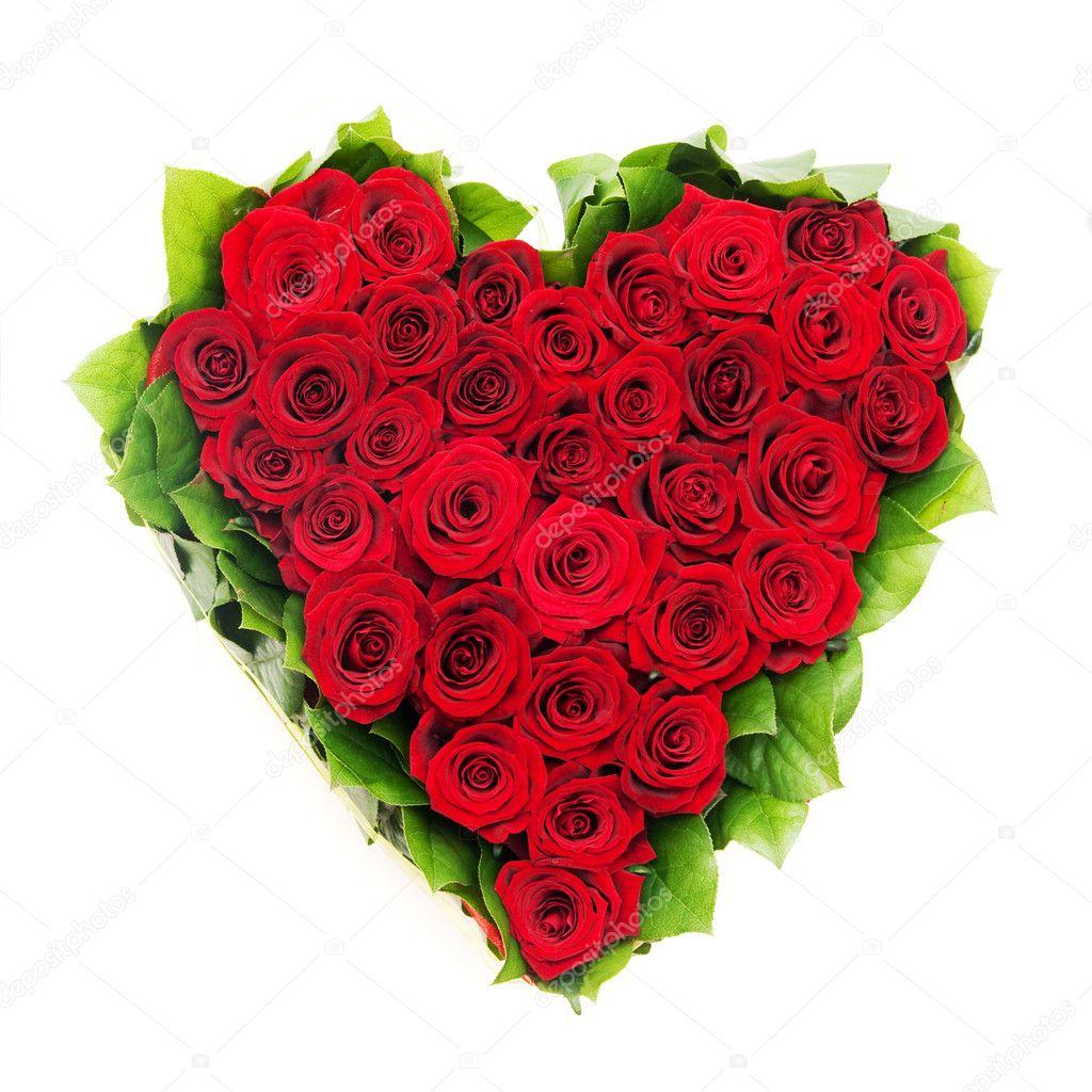 Розы — стоковое фото