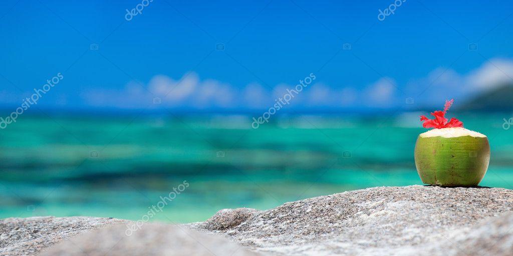 Coconut on tropical coast