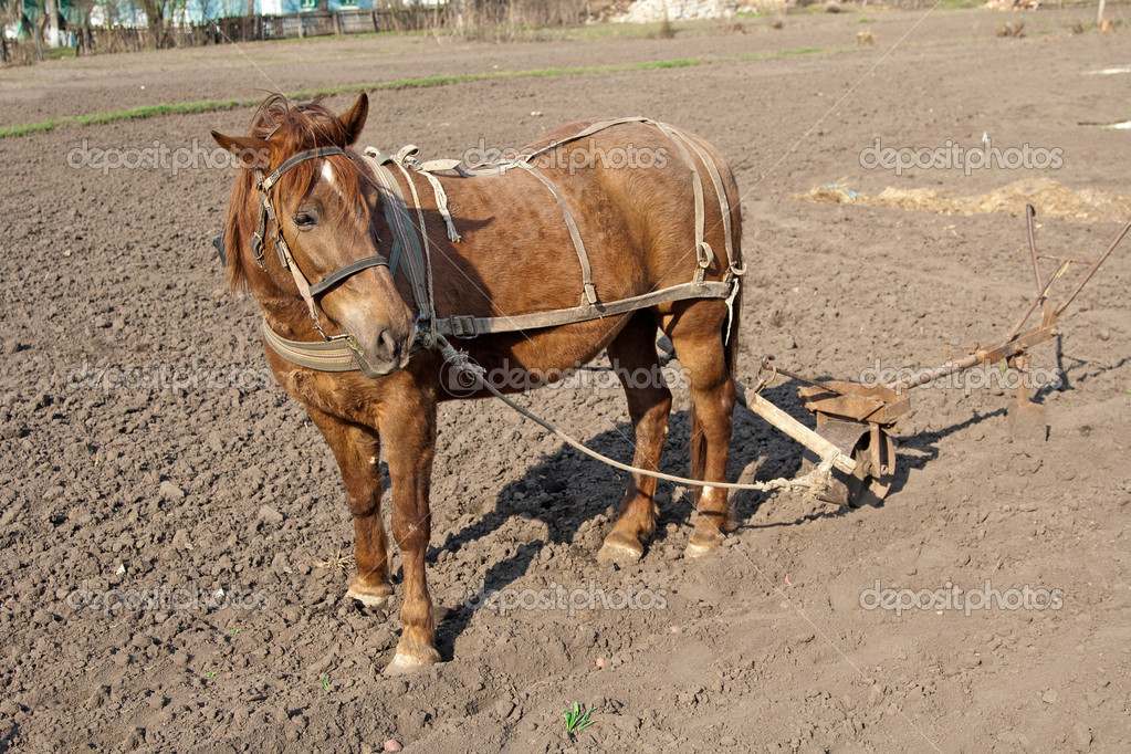 Horse with plow