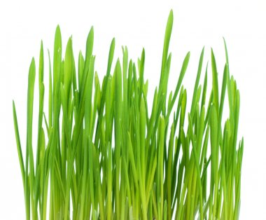 Fresh spring green grass isolated on white background stock vector