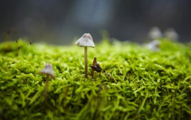 Macro photo of mushrooms growing in a forest