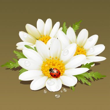 Camomile floral ornament. Flowers fresh background.