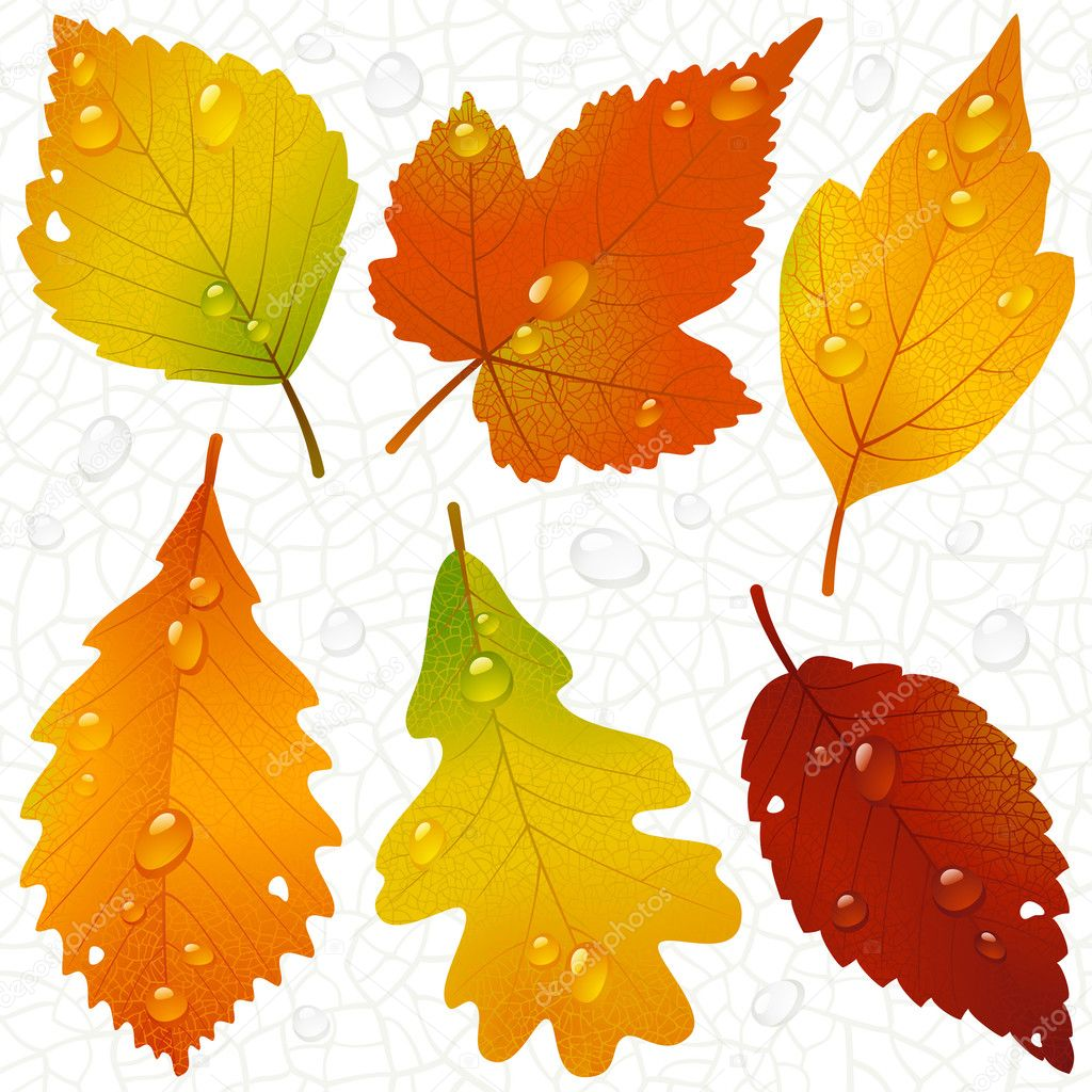 Autumn leaves and seamless vein background