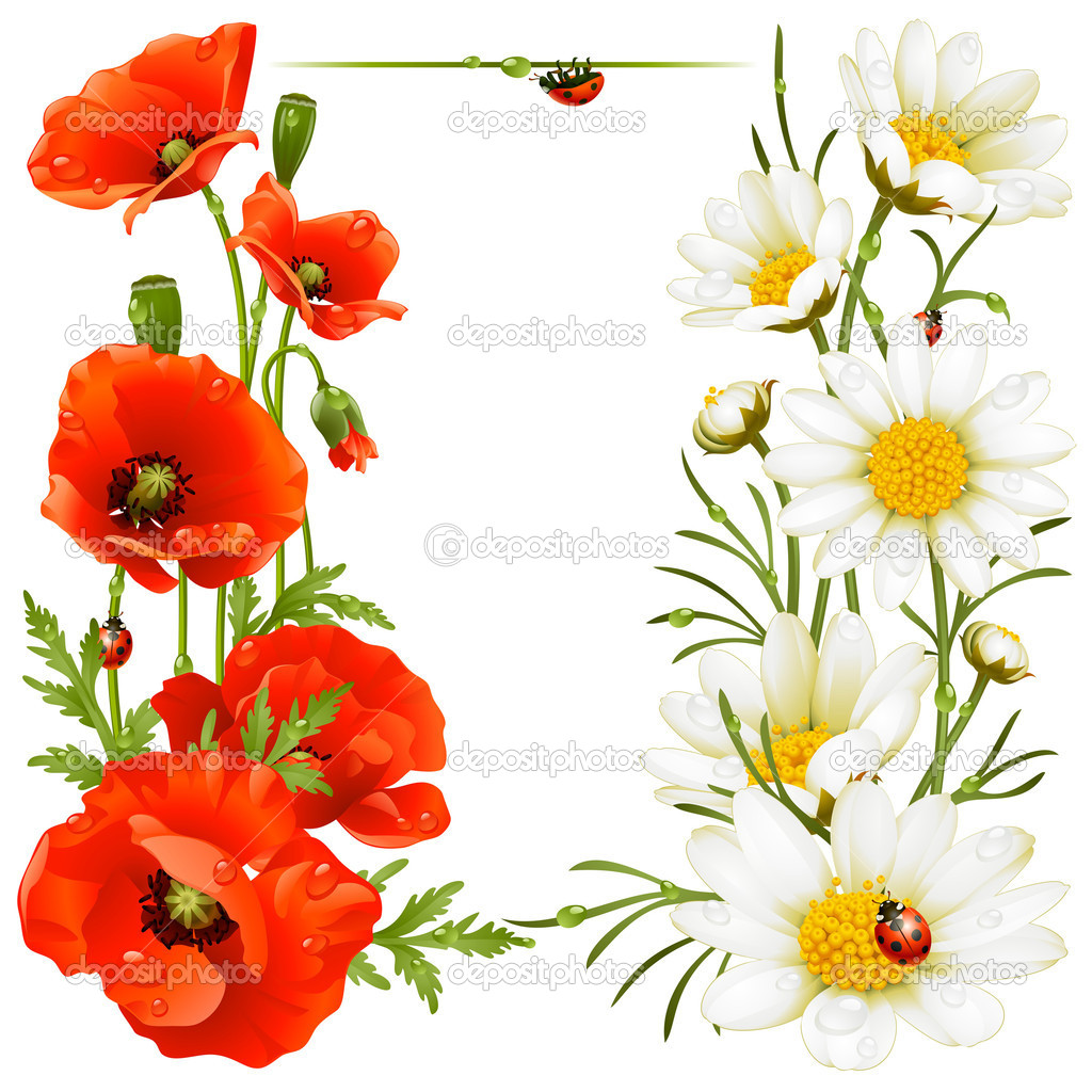poppy and camomile design elements u2014 stock vector d e n i s 4102393