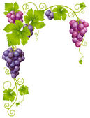 Fotografie Vector grape frame 3