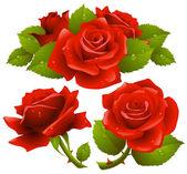 Fotografie Red roses set