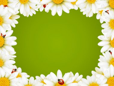 Camomile Floral Frame