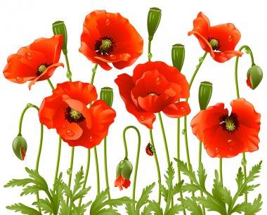 "Картина, постер, плакат, фотообои ""весенние цветы: мак "", артикул 4211612"
