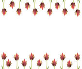 linie tulipánů za hranice