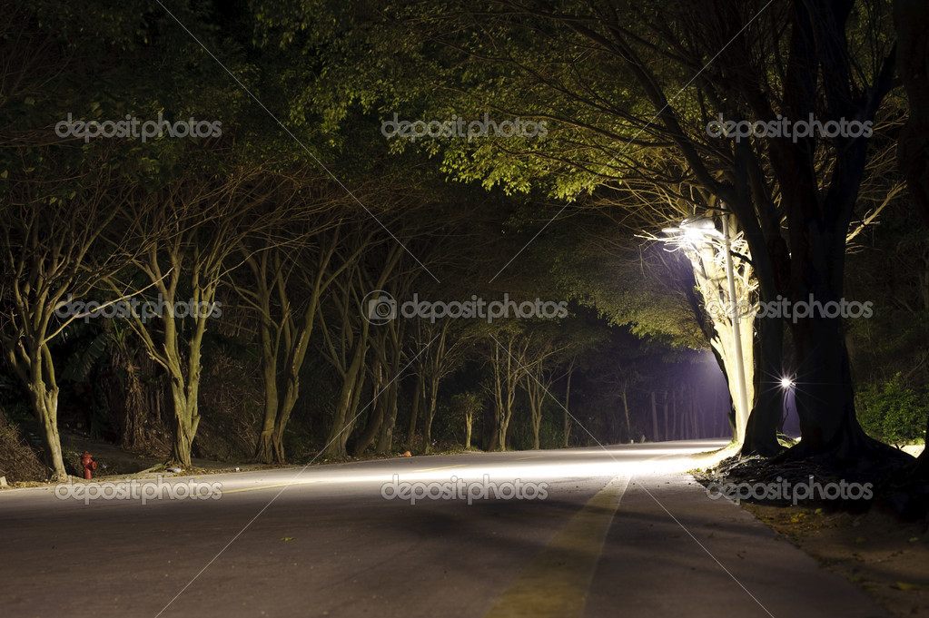 Road in dark forest