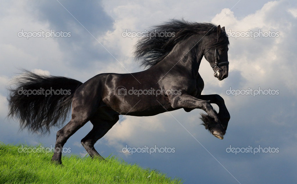Áˆ Friesian Horse Stock Pictures Royalty Free Friesian Photography Download On Depositphotos