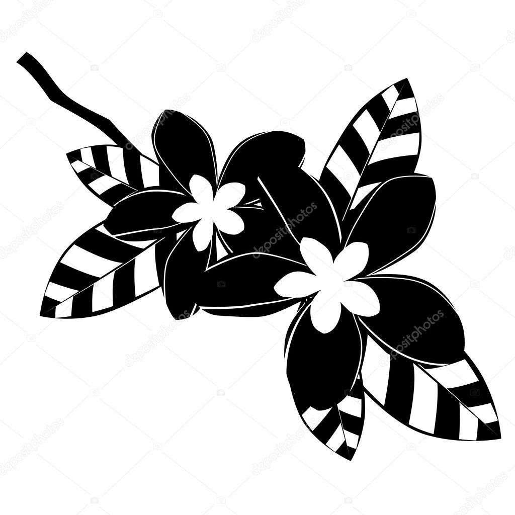 Fiori di frangipani bianco e nero vettoriali stock for Fiori stilizzati immagini